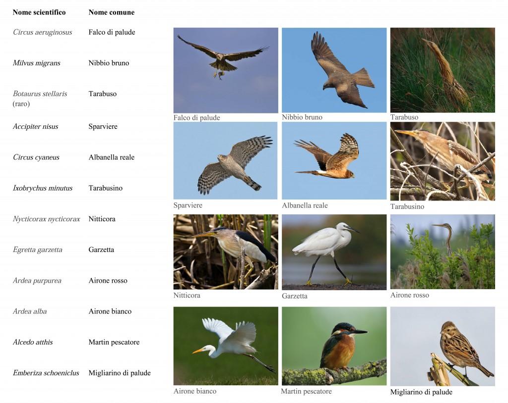 Uccelli scheda